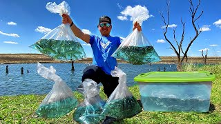 Stocking 2,500 WILD Baitfish in Backyard Pond!! [SOLD OUT the Bait Shop!]