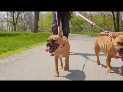 A New Dog Park is Coming to Niagara Falls!