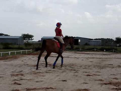 dana harper riding