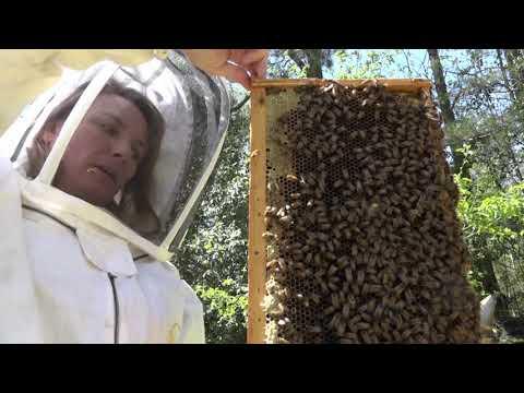 Zebulon Farm Fresh Market - Baxter's Bees