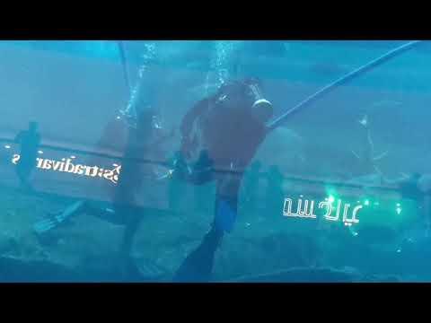 Dubai Mall Aquarium Underwater Zoo
