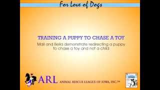 Training a Puppy to Chase a Toy