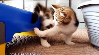 Chasing of tail | Funny Cats