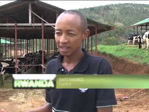 Importance of Rwanda's Agricultural Sector - Part 2