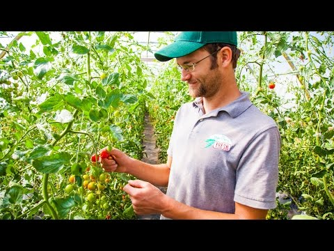 Farmer Spotlight: Growing Cherry Tomatoes With Bayberry Fresh