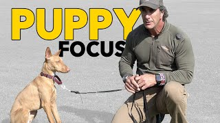 Puppy Training Teach Your Puppy to Focus - Robert Cabral Dog Training Video