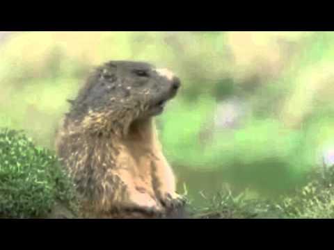 Alan or Steve? - Talking Animals