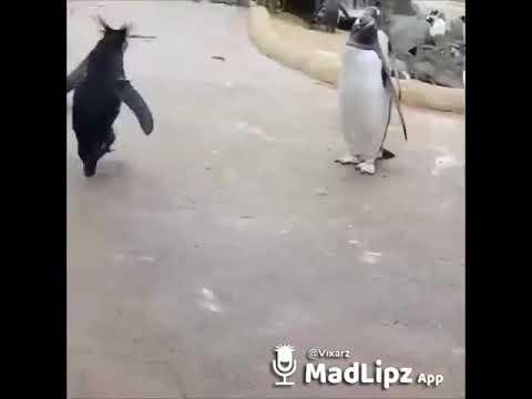 Video Pinguin Wochenende
