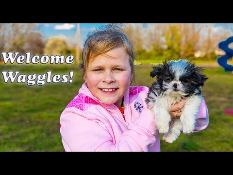 Welcome to TheEngineeringFamily Waggles the Silly Puppy Funny Puppy Surprise with the Assistant and
