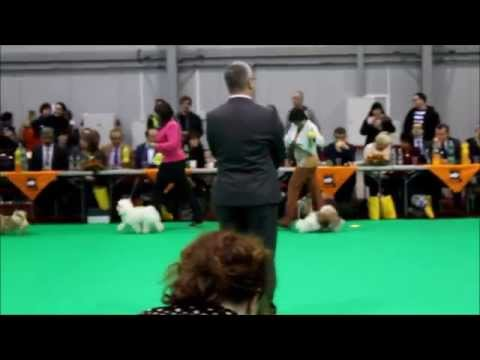 CACIB Prague Expo Dog 01.-02.11.2014