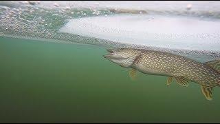 Ice Fishing For BIG Fat Pike