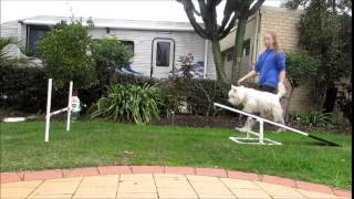 Teach Your Dog The See-saw | Zac & Lucy's Agility