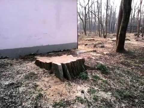 Краснодар. Затон. Вырубка деревьев