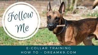 How To Train Follow Me - Small Dog - Freedom Remote Collar Training Method - Dreamk9.com