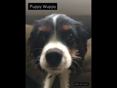 Puppy Wuppy (Out On SoundCloud)
