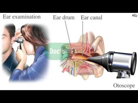 ENT /  3D  - 1 -  anatomy , physiology , diseases of external ear  .