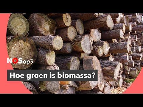 Hoe groen is biomassa eigenlijk? | NOS op 3