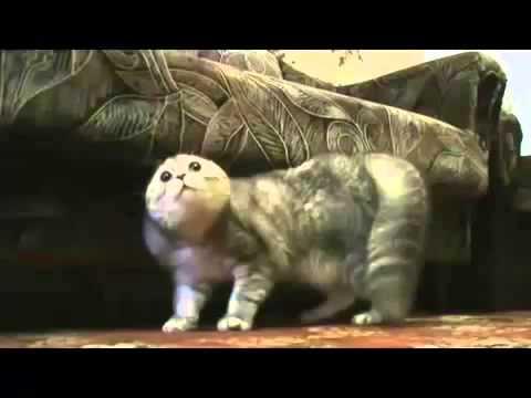 видео коты разговаривают прикол