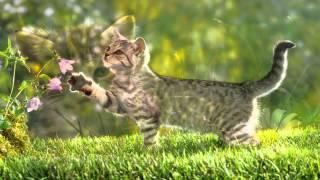 Фотосессия красивых кошек и котят