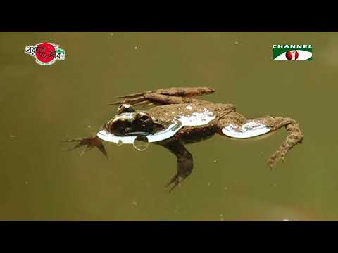 Nature and Life - Episode 276 (Sajek Hill Forest)
