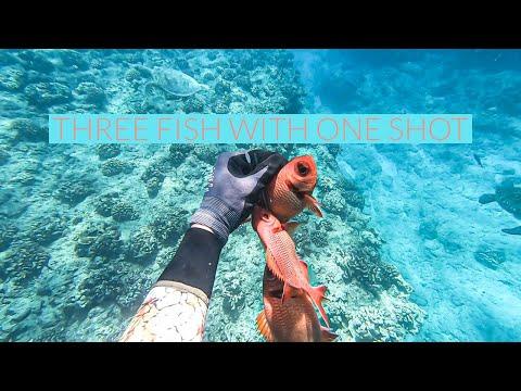 THREE FISH ONE SHOT? Spearfishing Hawaii-vlog 4