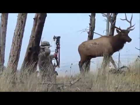 Montana archery elk hunt
