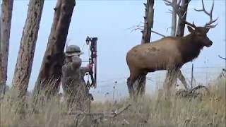 Montana archery elk hunt