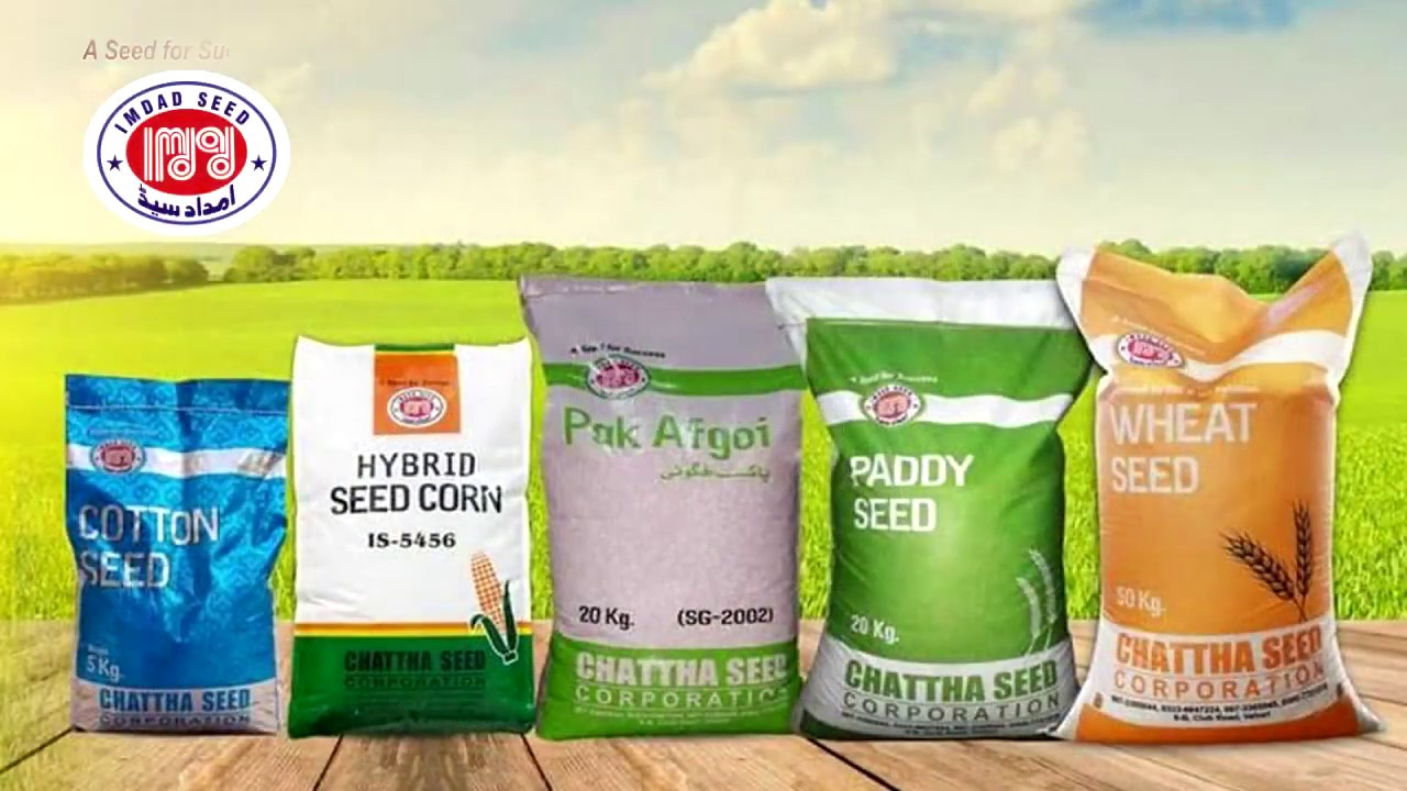 Chattha Seed Corporation Pakistan,s Best Seed Company ...