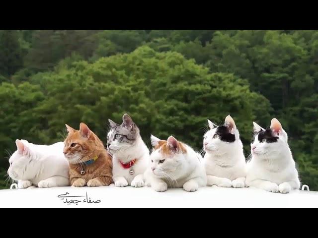 الأغاني الصف الأول أغنية كم قطة