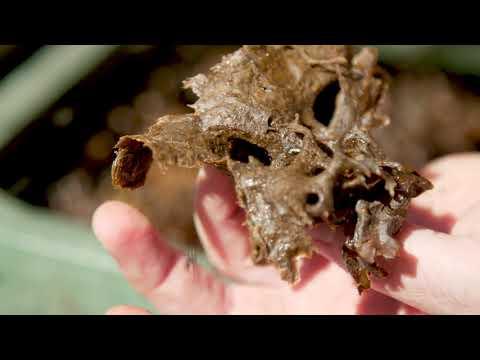 Видео: UQ Native Bees