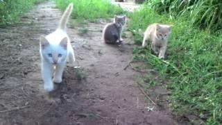 Котенки в дар