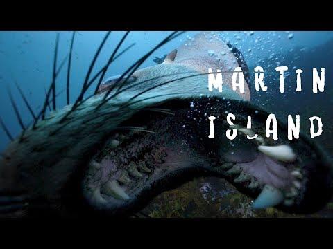 DISCOVER MARTIN ISLAND - Bite Sized Travel