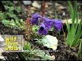 Oxalis Wild Flower In Kashmir Amarnath Yatra MDV 342 L62 22 mp3