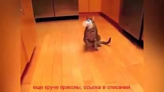 приколы видео про животных бесплатно онлайн
