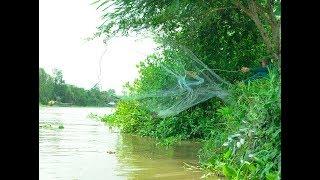 Quăng chài bắt cá dưới sông ở miền tây