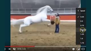 What Caused This Horse To Defend Itself  This Is NOT A Horse Problem