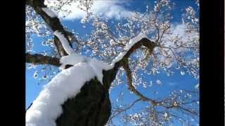 Psalm 51 Improvisatie op de vleugel door Gezinus Veldman.wmv
