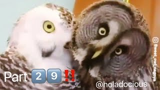 Hood Animal Voiceovers Part 2️⃣9️⃣‼️