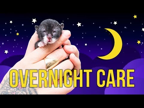 Tips for Overnight Kitten Care