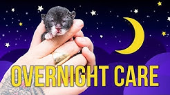Tips for Overnight Kitten Care