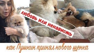 VLOG Полетела за собакой! Романтичное возвращение домой)