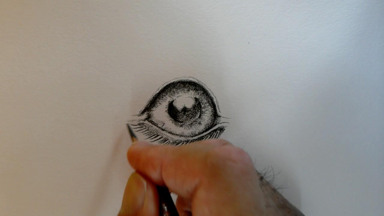 犬の目の描き方 Youtube