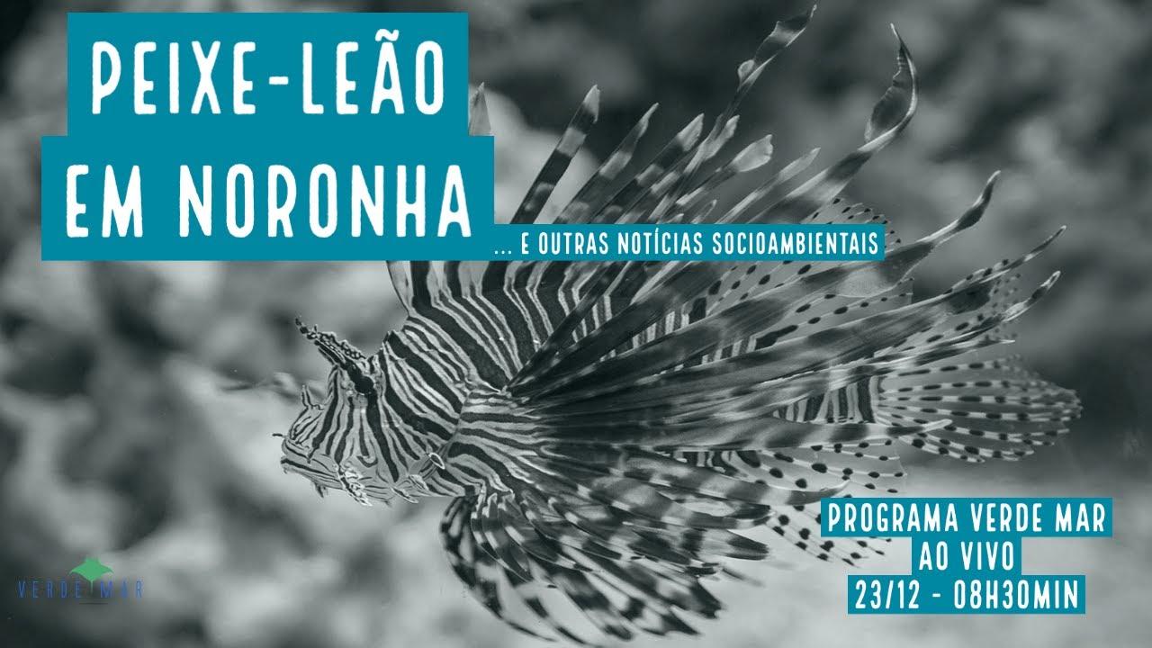 Peixe-leão encontrado em Fernando de Noronha