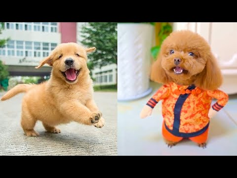 Baby Dogs - Cute and Funny Dog Videos Compilation #16 | Aww Animals