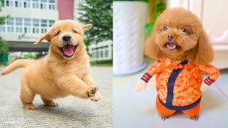 Baby Dogs - Cute and Funny Dog Videos Compilation #16   Aww Animals