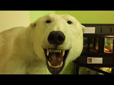 Burpee Museum of Natural History - Rockford, IL - Dinosaurs and Much More!