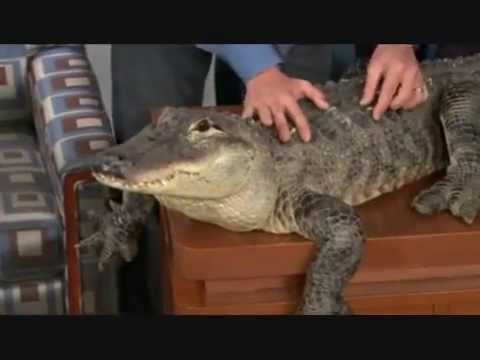 Jeff Corwin & His Animal Friends - 11/18/08