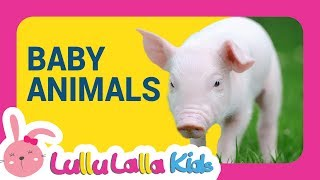 Animals Names for kids: Learning  Animals names (Baby Animals)