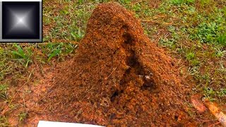 Fire Ant Mound FURY