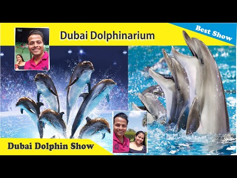 Dolphins Amazing Live Performance | Dubai Dolphinarium, UAE | Himani Gupta